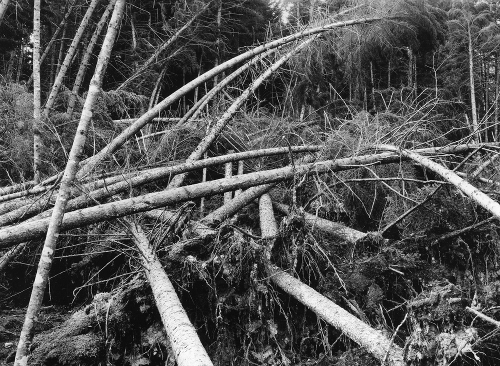 Forest impact from the 1938 Hurricane in New England