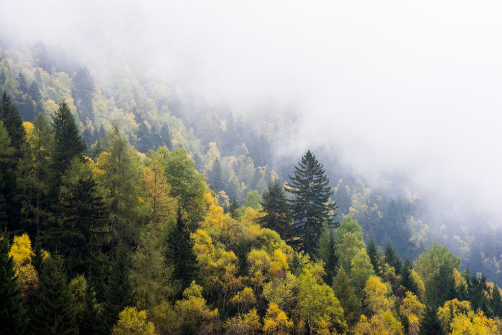aerial view of tree tops with low misty clouds