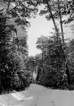 Winter scene along Pike Bay Loop Drive, Chippewa National Forest, 1939.