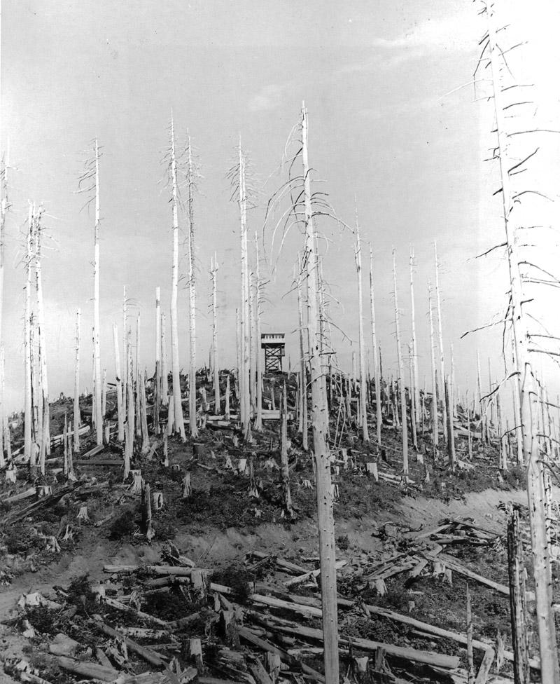 Hembre Ridge Lookout, Tillamook Burn, Oregon, 1952.