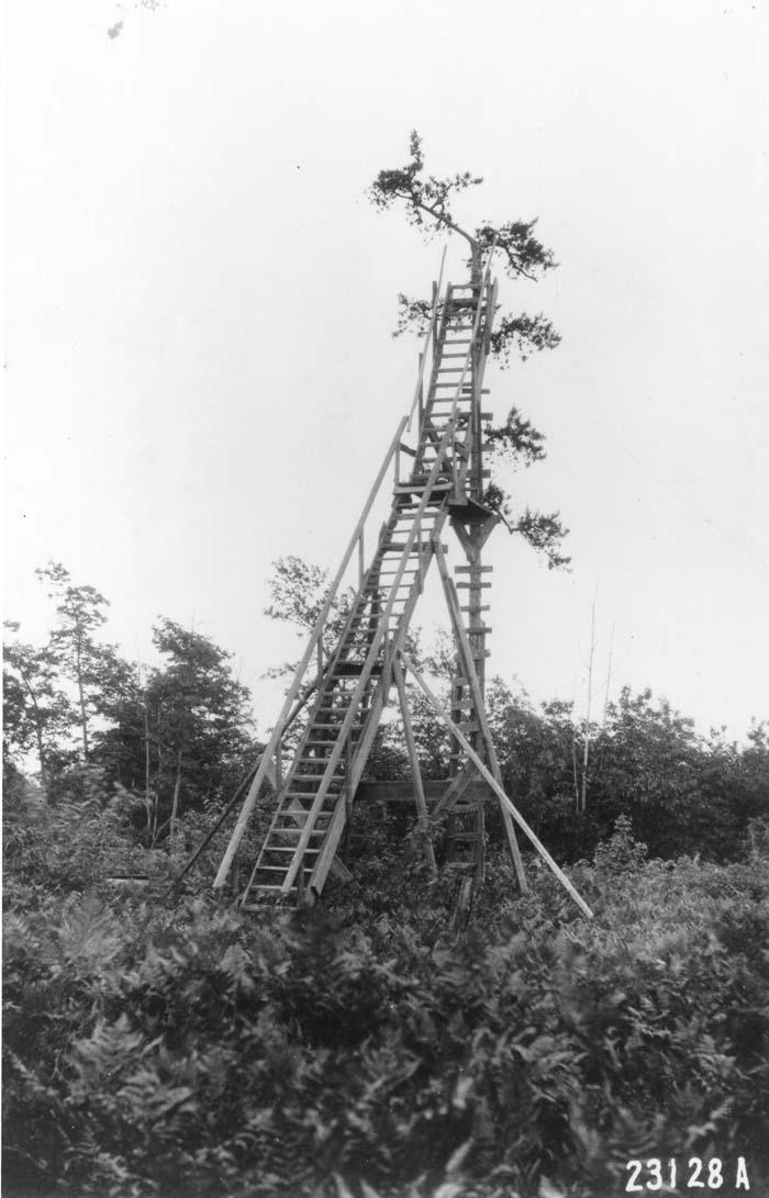 Treetop lookout tower, Pennsylvania.