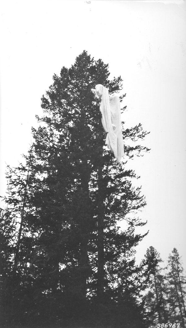 Parachute in tree.