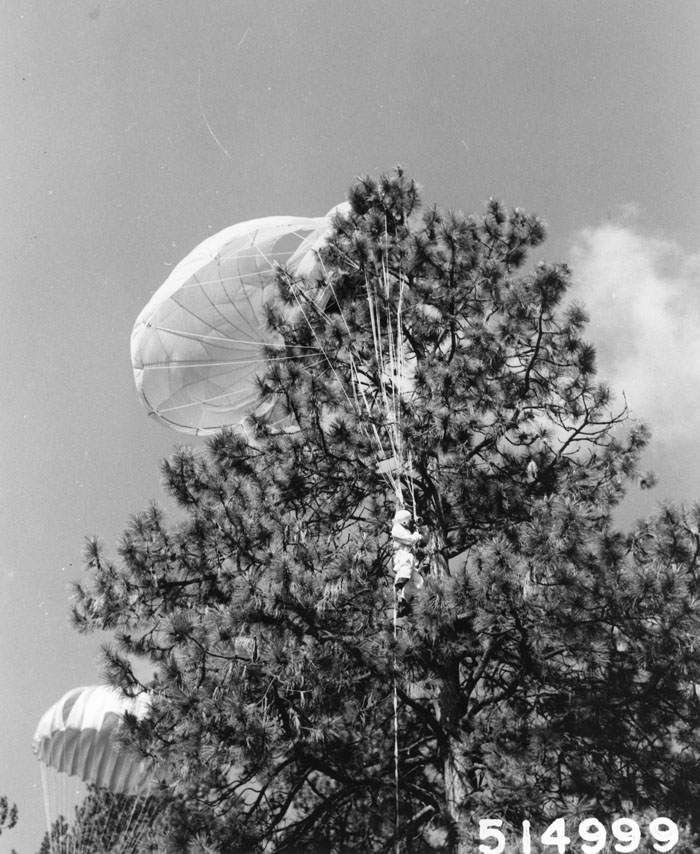 Forest Service smokejumper caught in tree, Lolo National Forest, Montana.