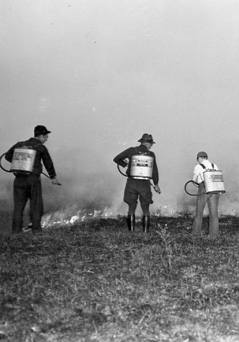 Volunteer fire crew equipped with Indian Fire Pumps.
