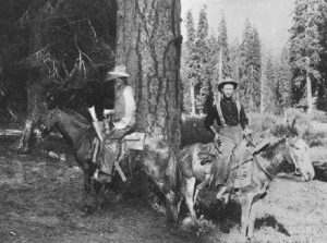 Sudworth and assistant on mules in Hassic Meadow, Middle Tule, Sierra Forest Reserve, 1901.