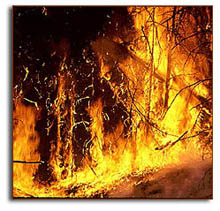 A wildfire in Yellowstone Park. Courtesy of NOAA Paleoclimatology Program.