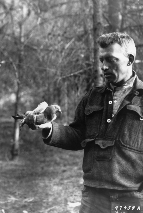 Forest ranger holding carrier pigeon.