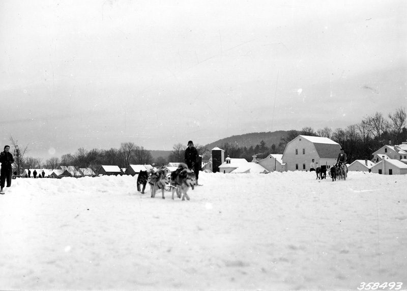 Two dog teams finishing at Chester dog sled races, 1938.