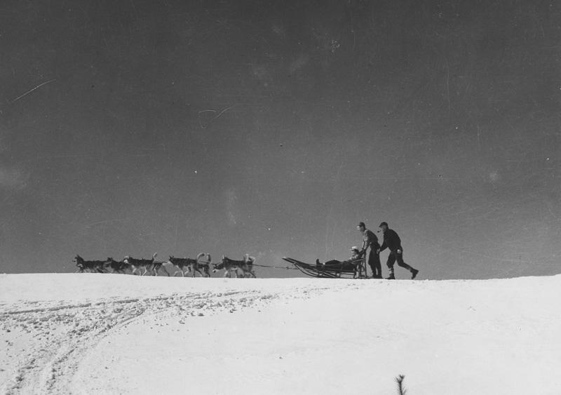 Seeley's sled dog team.