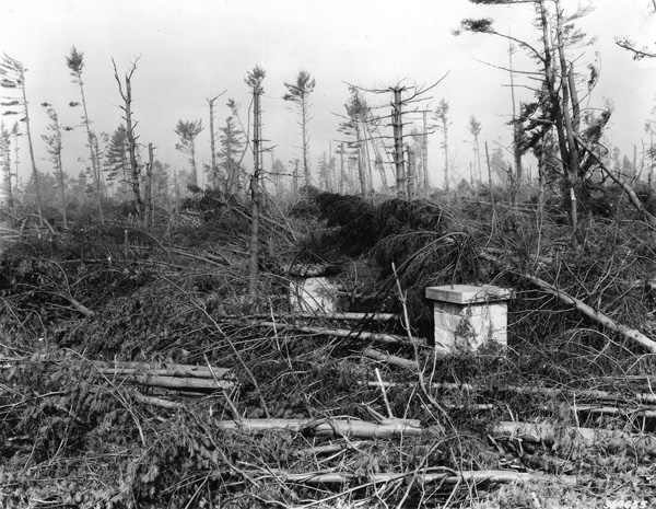 Hurricane storm damage, Wheelock Park, Keene, New Hampshire.