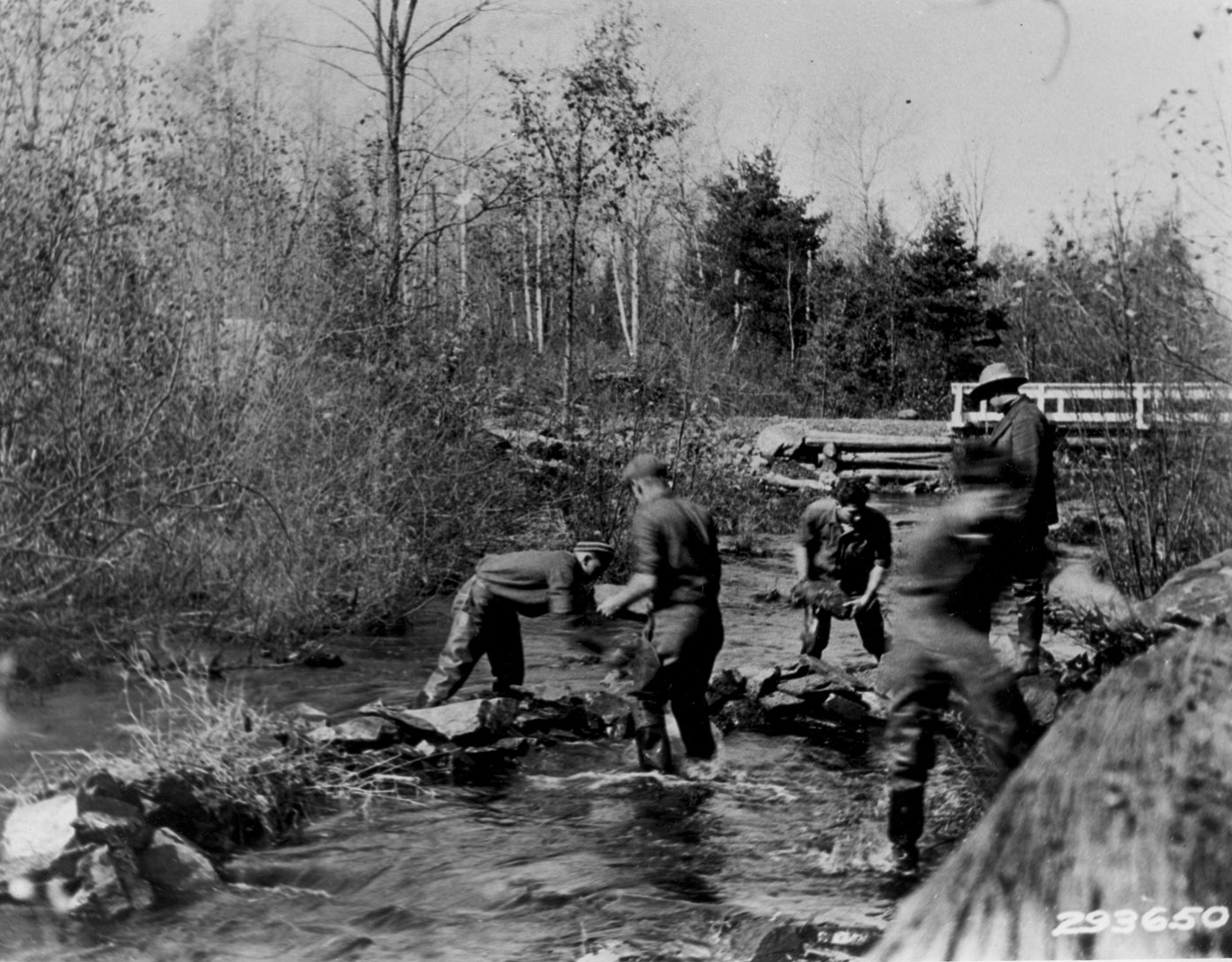 Civilian Conservation Corps Michigan Forest History