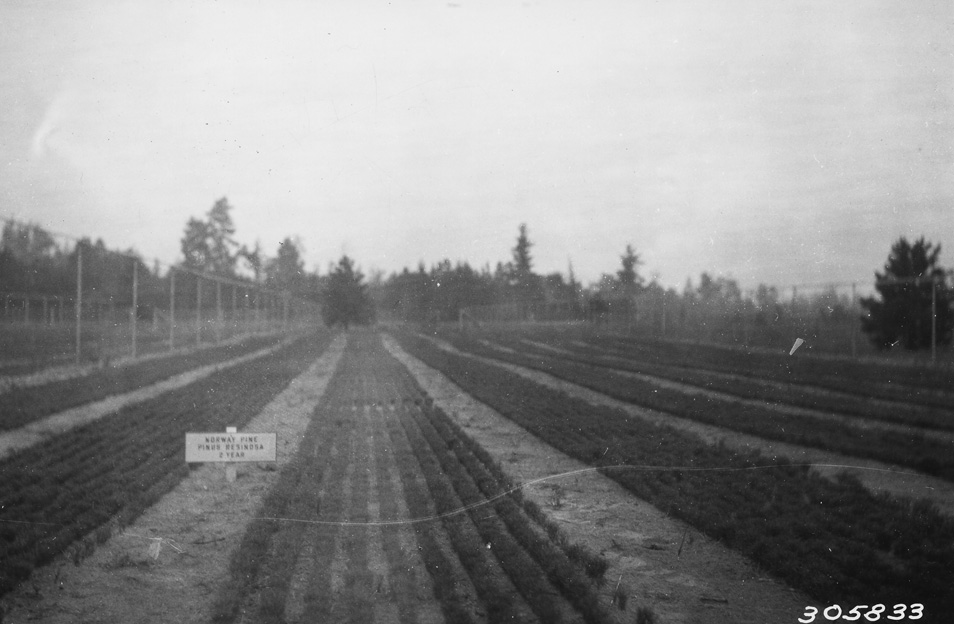 Manistique Nursery Michigan The Was Renamed Wyman In 1936 To Honor Memory Of Late Thomas B