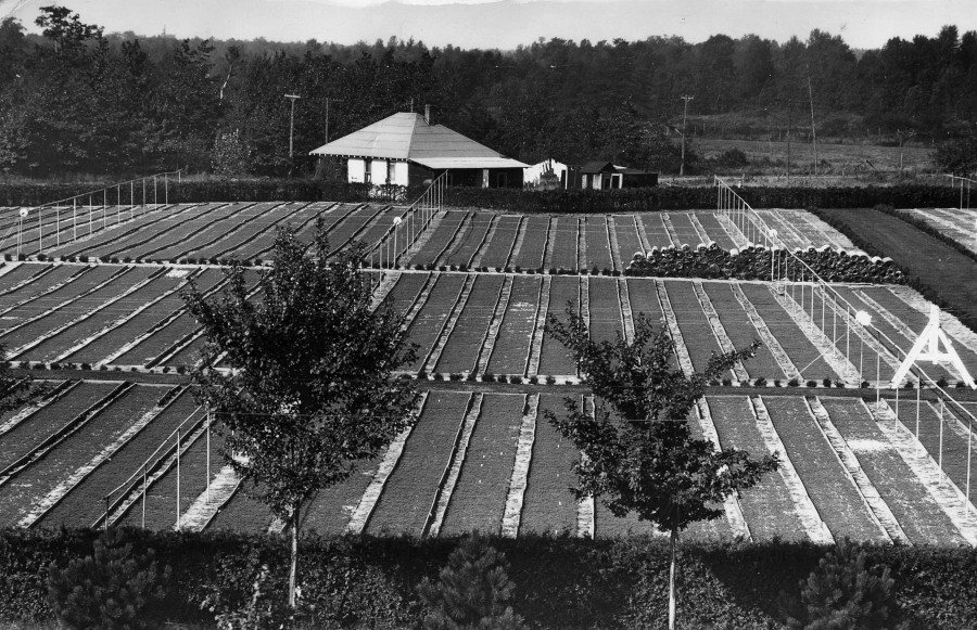 Beal Nursery, looking west from top of headquarters building, 1929.