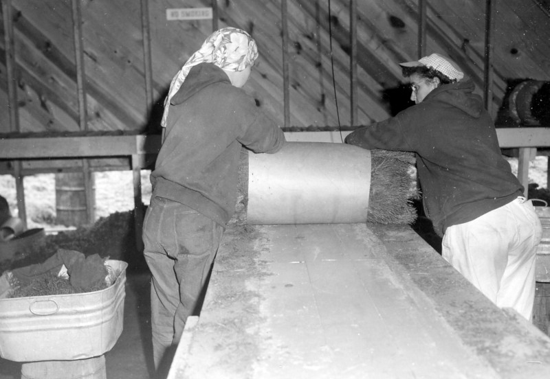 Chittenden Nursery workers completing the rolling of the bale, 1960.