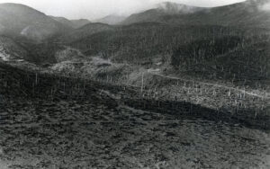 Weyerhaeuser Company land in the Green River-Hoffstadt Creek vicinity,  near Mount St. Helens after the volcano eruption of 1980