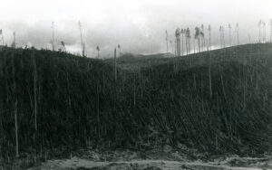 Weyerhaeuser Company land in the Mount St. Helens' area after the volcano eruption of 1980.