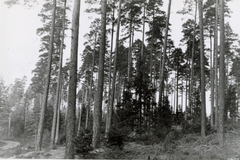 [Forest scene, Europe.][Photo from the Clarence Forsling Papers. Photos document Forsling's 1935 trip to Europe funded by the Carl Schurz Memorial Foundation and the Oberlaender Trust.]