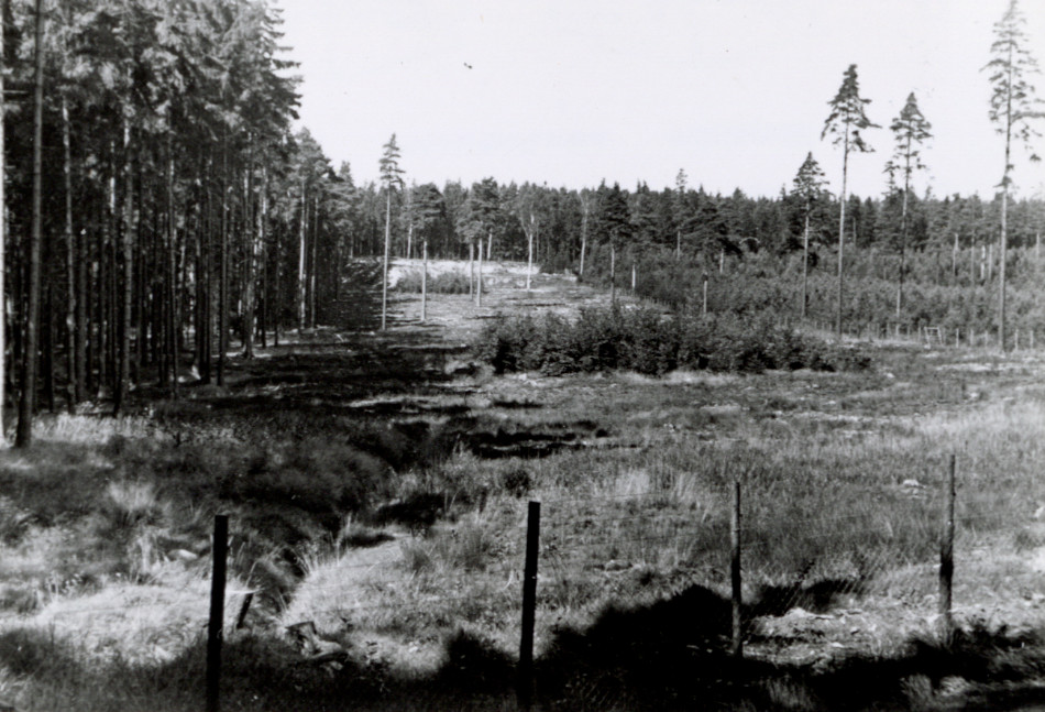 [Fenced forest stand, Europe.][Photo from the Clarence Forsling Papers. Photos document Forsling's 1935 trip to Europe funded by the Carl Schurz Memorial Foundation and the Oberlaender Trust.]