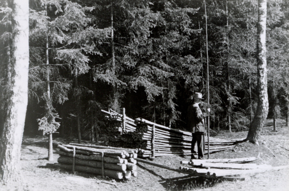 [Small log piles at forest edge with forester, Europe.][Photo from the Clarence Forsling Papers. Photos document Forsling's 1935 trip to Europe funded by the Carl Schurz Memorial Foundation and the Oberlaender Trust.]
