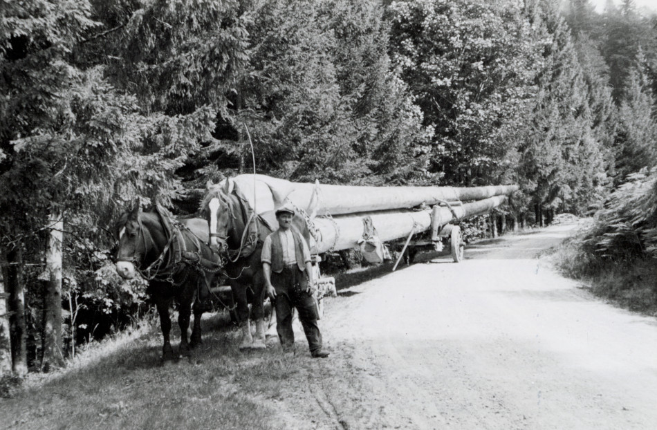[Hauling logs by horses, Europe.][Photo from the Clarence Forsling Papers. Photos document Forsling's 1935 trip to Europe funded by the Carl Schurz Memorial Foundation and the Oberlaender Trust.]