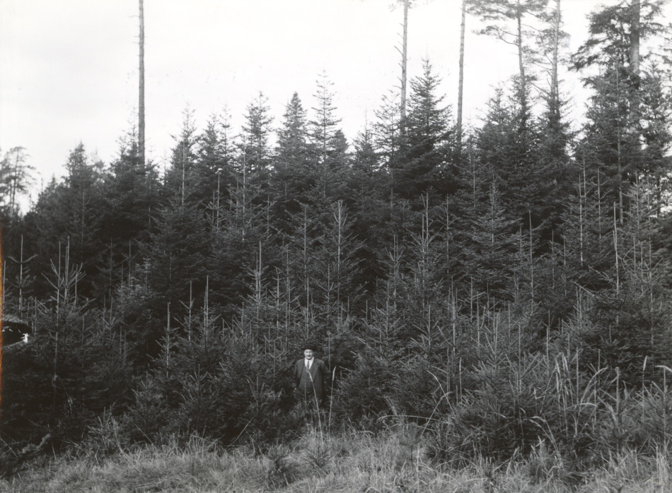 Natural reproduction of spruce and fir. Winterthur, Schweiz. Dr. Burger. [Photo from the Clarence Forsling Papers. Photos document Forsling's 1935 trip to Europe funded by the Carl Schurz Memorial Foundation and the Oberlaender Trust.]