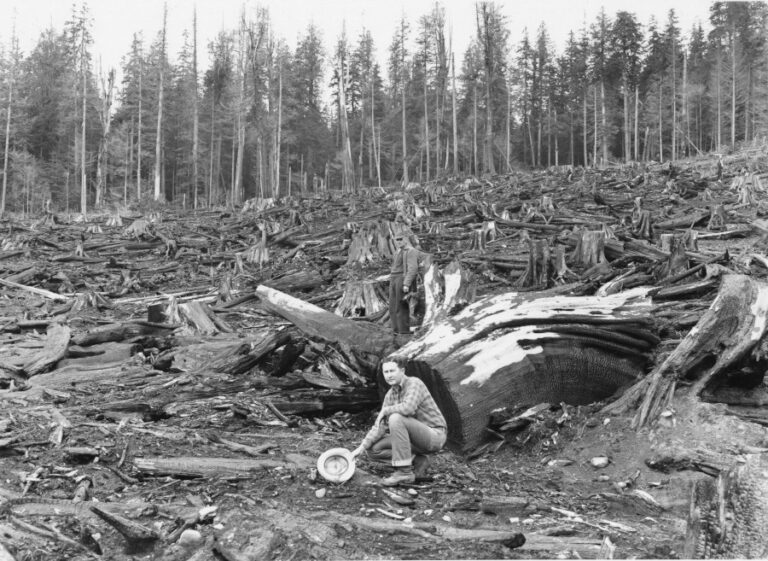 Cutting on a portion north of Quinault Reservation