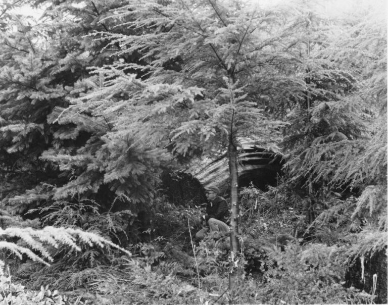 Onnie E. Paakonen in Douglas-fir plantation on a cutting on a portion of the State of Washington's sustained yield unit