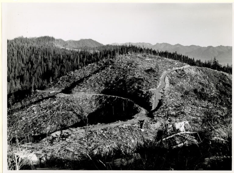 View to the east of clear-cut block from State lookout on allotment of Florian Kjos
