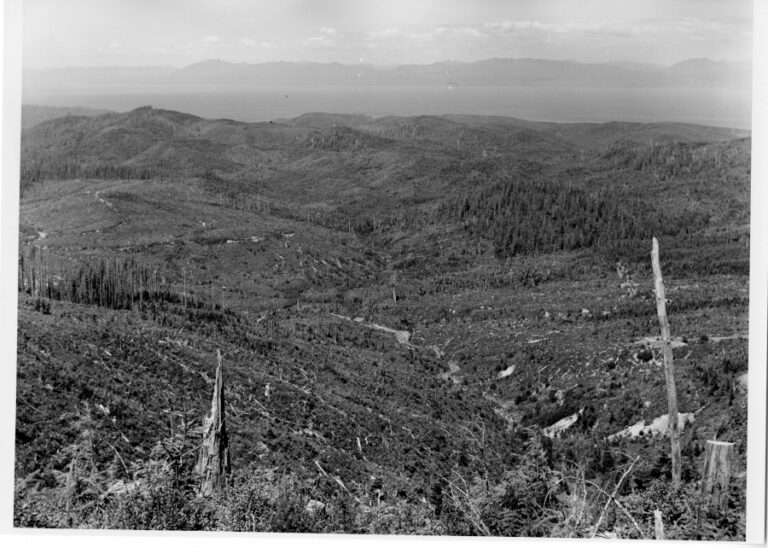 View from Sooes Peak to the north across Makah cut-over lands.