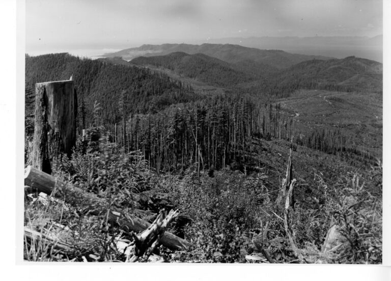 View from Sooes Peak to the northwest across Makah forest lands.