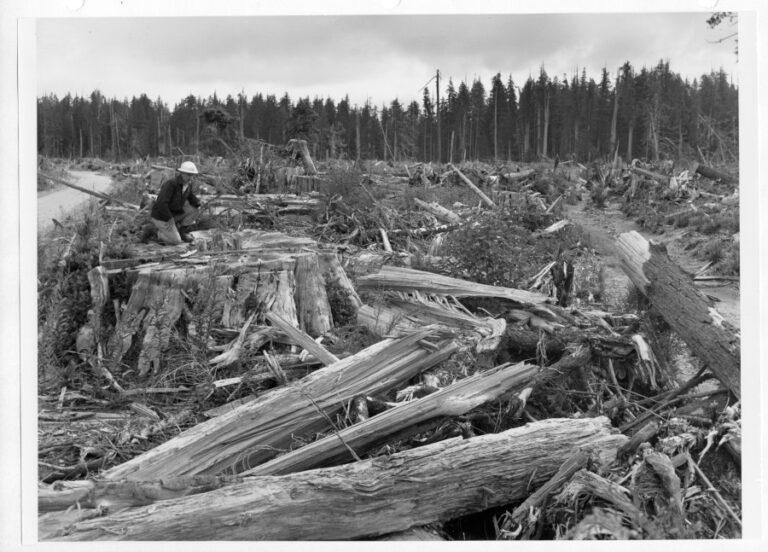Exceedingly heavy cedar slash resulting from 1955 logging of the Richard Jackson allotment