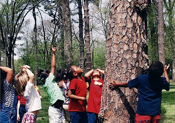 elementary aged children looking up at a tree